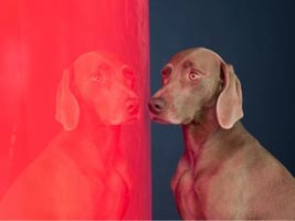 The Foundation for Art and Preservation in Embassies is pleased to announce its newest initiative, a collection of contemporary American photography, and its inaugural special editions donated by artists Tina Barney and William Wegman.