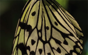 American Museum of Natural History: opens THE BUTTERFLY CONSERVATORY