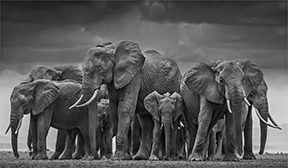 A.galerie presents : DAVID YARROW
