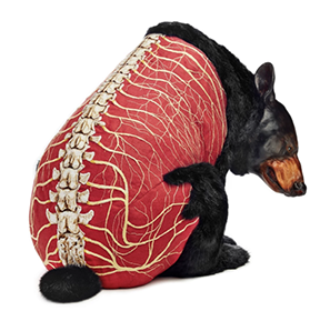 "Deborah Simon, Ursus Americanus, 2013, 18"" H x 18"" D x 22"" W, polymer clay, faux fur, linen, embroidery floss, acrylic paint, glass, wire and foam"